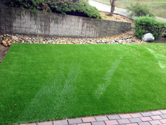 Artificial Grass Photos: Artificial Grass Corona de Tucson, Arizona Dog Park, Backyards
