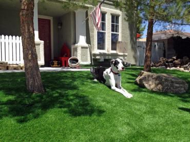 Artificial Grass Photos: Artificial Turf Cost Seligman, Arizona Dog Run, Front Yard Ideas