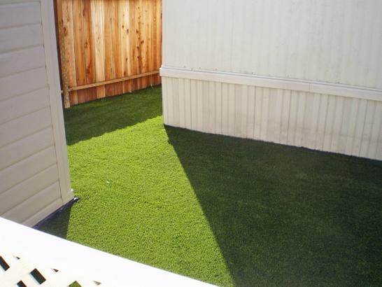 Artificial Grass Photos: Green Lawn Sanders, Arizona Dog Park, Backyard